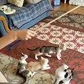 Rendez fous vos chats.. avec une ficelle !