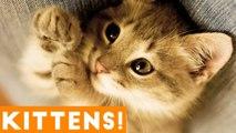 Cutest Kitten Video Compilation of June 2018 - Funny Pet Videos