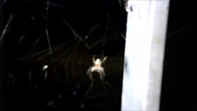 MCH 142 SPIDERS.IF YOU HAVE ARACHNOPHOBIA WATCH THIS.