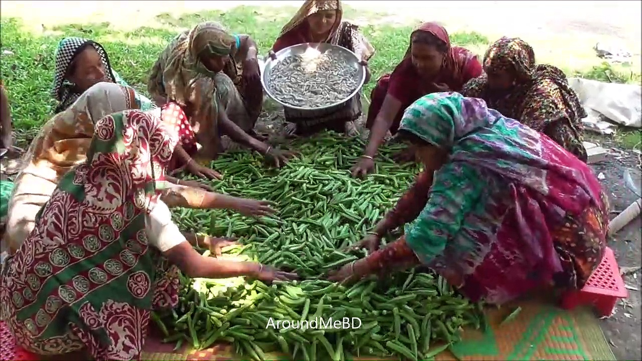 80 KG Farm Fresh Lady's Finger & Shrimp Mixed Curry Cooking – Easy But Tasty Village Food Recipe