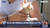 Déjà 8.000 animaux ont été abandonnés cet été