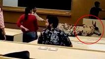 Bull enters IIT Bombay class, Video viral