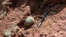 Chinese boy discovers dinosaur eggs on river bank in China's Heyuan
