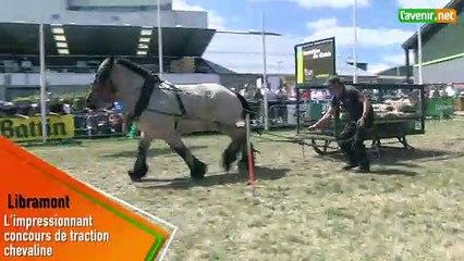 L'Avenir- L'impressionnant concours de traction chevaline à la Foire de Libramont