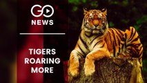 India Reaches Carrying Capacity Of Tigers