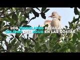 Manglares, clave para disminuir efectos por cambio climático; reportaje El Heraldo TV
