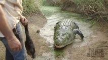 Il fait sortir un énorme crocodile de l'eau pour le nourrir : animal de plus d'une tonne