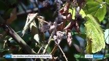 Environnement : les abeilles souffrent de la sécheresse