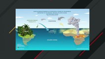 Smoke From Africa Travels All The Way To Amazon Rainforest And Acts As Fertilizer