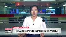 Grasshopper invasion of Las Vegas caused by sky beams, humid weather: experts