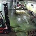 Un ours s'introduit dans une usine de poissons !