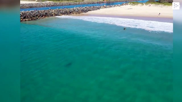 A white shark stalks a few meters away from a group of children in Australia