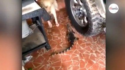 Ses chiens aboient : il y a quelque chose dans le garage. Il va voir et ne peut pas y croire !