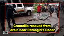 Crocodile rescued from drain near Ratnagiri's Dadar