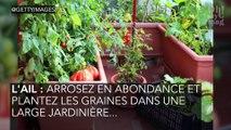 Ces plantes faciles à cultiver sur son balcon !