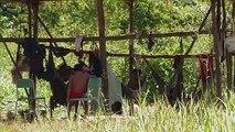 ONU condena muerte de indígena en Brasil mientras investigación avanza
