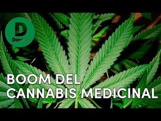 Cannabis medicinal: Colombia se vuelve potencia