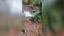 Un énorme anaconda aperçu dans un petit bassin