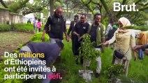 En Éthiopie, 353 millions d'arbres plantés en 12 heures
