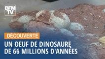 En Chine, un enfant découvre un œuf de dinosaure vieux de 66 millions d'années