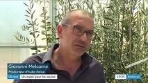 """Italie : un espoir de sauver les oliviers de la """"lèpre"""""""