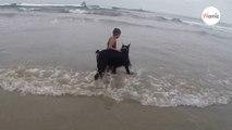 Un chien géant bondit sur une fillette qui joue dans l'eau et….