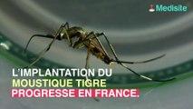 Puy-de-Dôme : le moustique tigre implanté et très actif