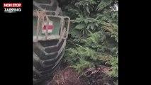 L214 : la nouvelle vidéo choc d'un élevage de porcs (vidéo)