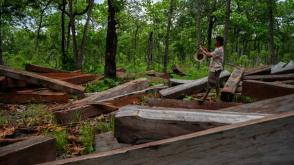 Plundering Cambodia's Forests   101 East