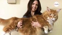 Elle adopte un chaton : quelques années plus tard, elle comprend que ce n'est pas un chat ordinaire