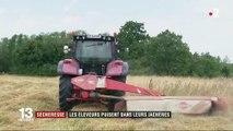 Sécheresse : les éleveurs autorisés à faucher leurs jachères