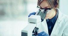 Le Japon autorise la culture d'embryons hybrides humains-animaux