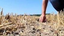 Le journal du 01/08/2019 - Agriculture : contre la sécheresse, des réserves d'eau de pluie