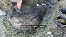 """""""On a la pièce la plus extraordinaire"""" : des paléontologues découvrent un énorme os de dinosaure près d'Angoulême"""