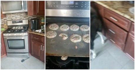 Cão incrimina-se antes de arranjar qualquer desculpa para o desaparecimento dos biscoitos