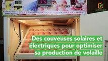 Burkina Faso : Des couveuses solaires et électriques pour optimiser sa production de volaille