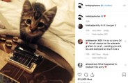 Ed Sheeran ha il cuore a pezzi: è morto il suo gatto