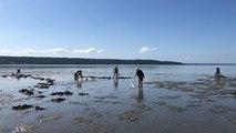 Du monde sur les plages brestoises pour les grandes marées de l'été