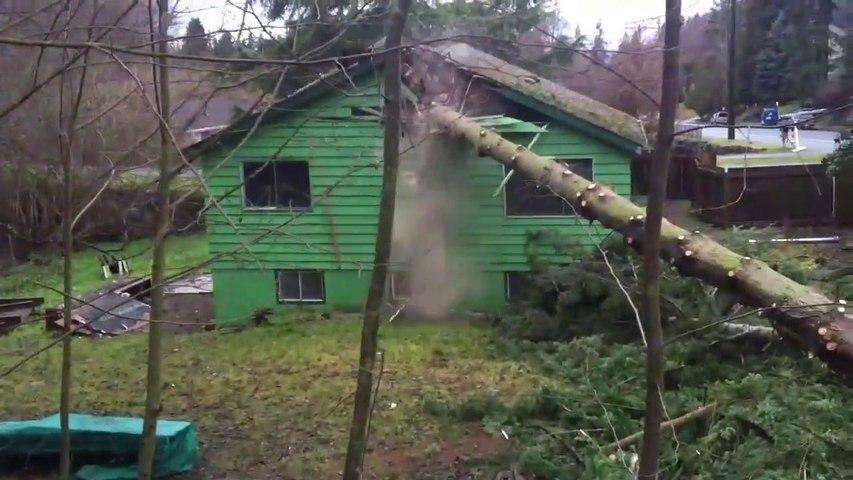 Ces bucherons font tomber un arbre au pire endroit : sur la maison