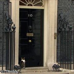 Larry el gato, Jefe de Ratoneras de la Oficina del Gabinete británico, que se ha convertido en una celebridad