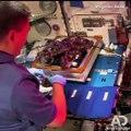 Los astronautas están cultivando distintas clases de verduras en el Espacio. ¿Para qué?