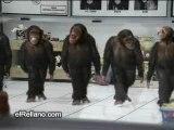 Monos-Bailarines