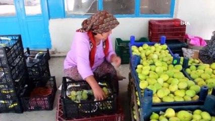 Mersin'de İncir Altın Yılını Yaşıyor