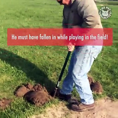 Farmer Rescues Alpaca From Hole