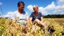 Les pois chiches cultivés en bio aux portes de Metz