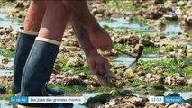 Charente-Maritime : les grandes marées ravissent les pêcheurs à pied