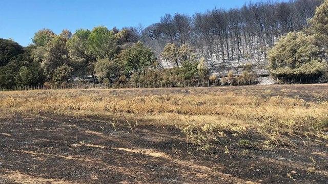 La découverte des pâturages après les incendies