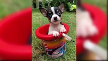Cutest Dogs In The World 2019 - Cute Dogs And Puppies Doing Funny Things - Puppies TV