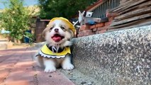 Cutest Puppies Doing Funny Things - Cute Little Puppies Funny Videos - Cute Puppy Dog Compilation