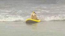 Découvrez les championnats du monde de surf canin
